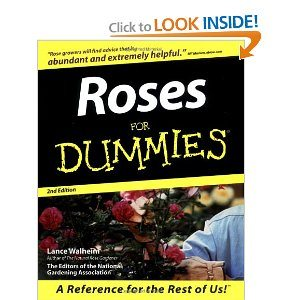 Dummies Books Deal